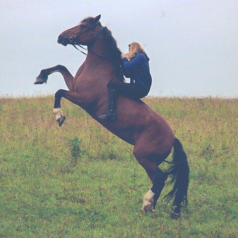 Два дня на лошадях в Костромской области