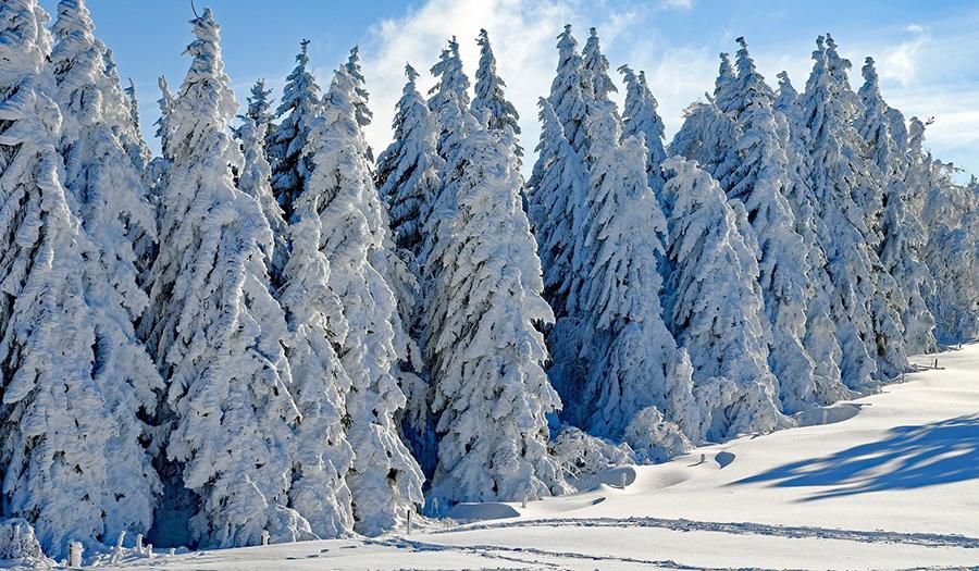 Парк Паанаярви расположен на границе с Финляндией