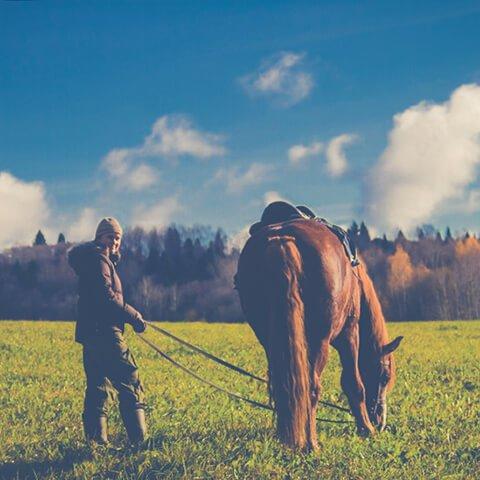 Неделя на лошадях