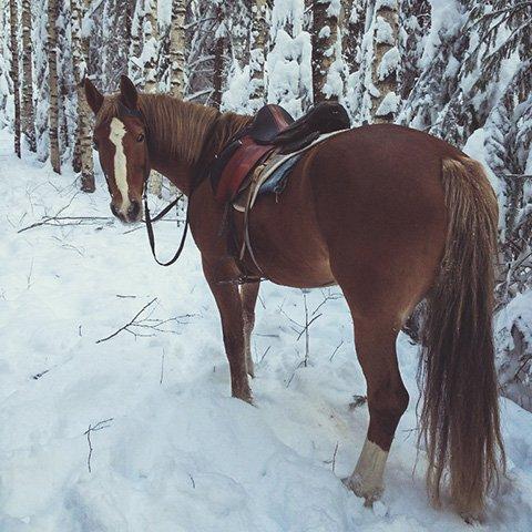 Новогодние праздники на лошадях в селе