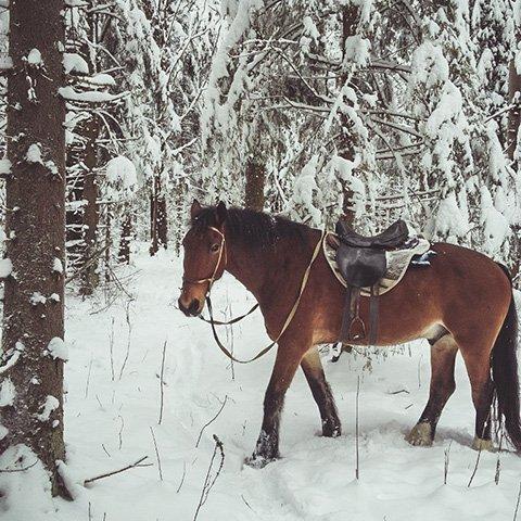 Новый год на лошадях