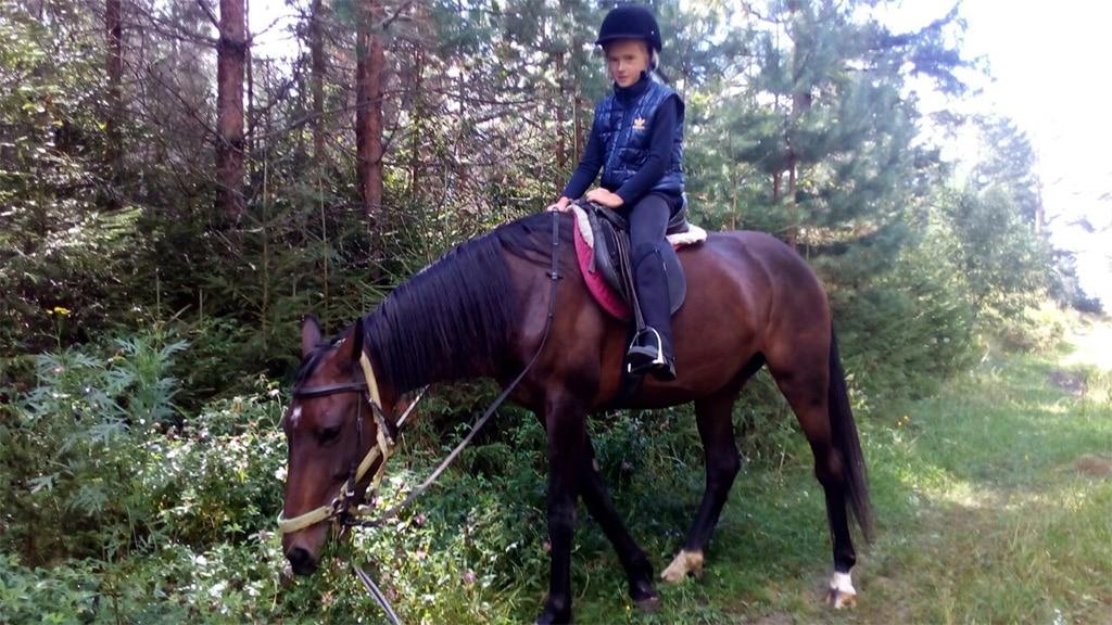 Прогулки по лесным тропам на лошадях