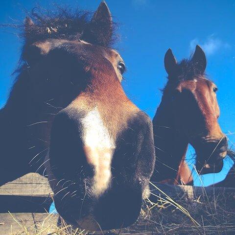 Три дня на лошадях в Костромской области