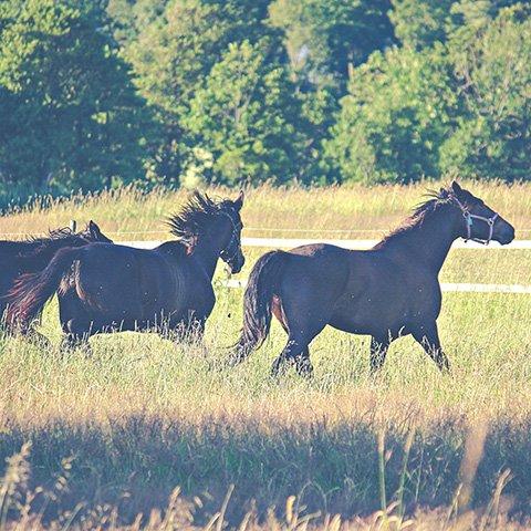 Выходные в деревне на лошадях