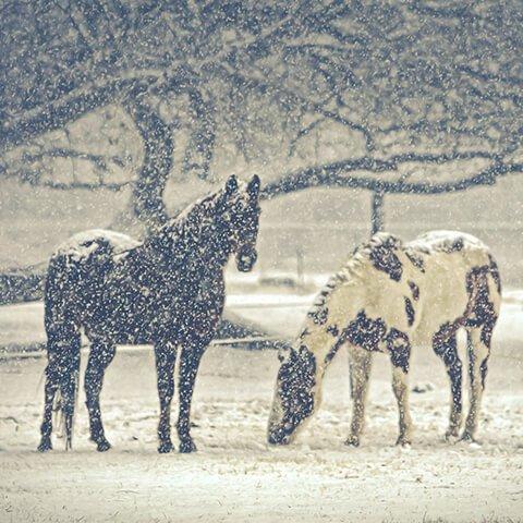 Зимние выходные на лошадях