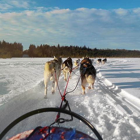 Зимние выходные в Карелии с Adventurity
